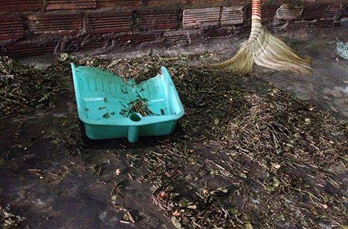 Chè Bắc Thái Nguyên bẩn vẫn còn tràn lan trên thị trường